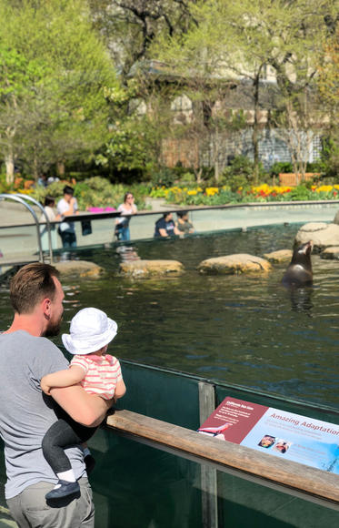 Sea Lions at the Central Park Zoo