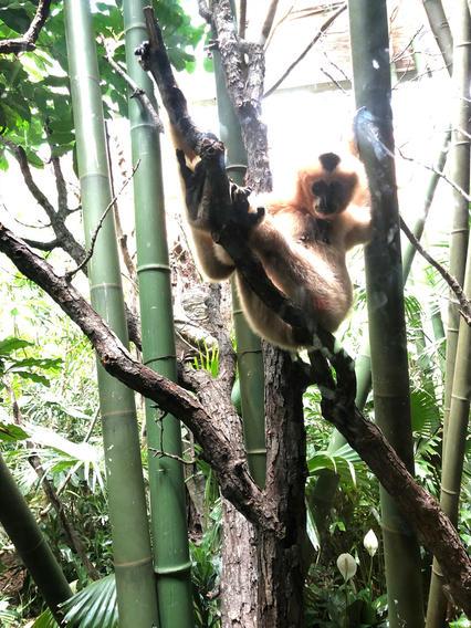 Monkeys at the Bronx Zoo